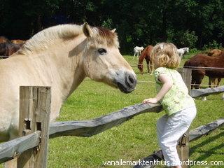 paardenkamp metfjord