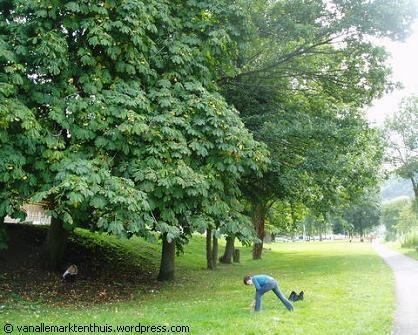 Onder de kastanjeboom