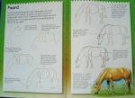 Hoe teken ik een paard?