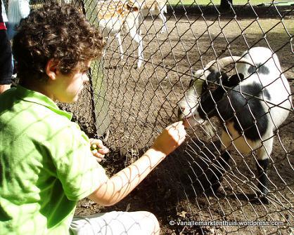 Philip voert geitje