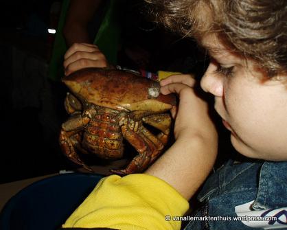 Grote krab