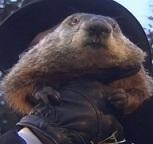 Punxsutawney Phil, de bosmarmot